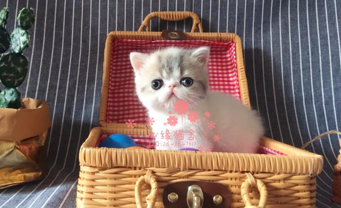 太原哪里卖加菲猫较便宜多少钱一只 购买包健康多久