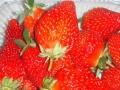 襄阳采摘园红颜草莓熟啦,享采摘、农家乐、烧烤等活动