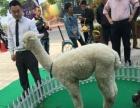 2015羊年拍电影租羊驼特约最有看头,上海启欣展览