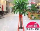 深圳福田南山办公室绿植租赁 绿植销售 绿化养护 带发票