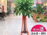 深圳福田南山罗湖办公室绿植租赁 绿植销售 绿化养护 带发票