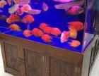 北京专业一家清洗鱼缸 维护养护 租赁,海缸造景等
