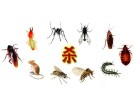 东莞灭治白蚁 杀虫灭鼠 龙科专业资质认证 技术领先 值得信赖