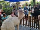 上海羊驼出租展览展示庆典暖场矮脚马租赁