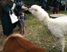 上海松江区荷兰猪租赁-羊驼出租-矮马转租-孔雀出租-酒吧轰趴