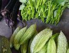 主城绿色蔬菜配送 自种自销- 新鲜健康-直送到家