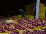 甘肃四方达花牛苹果批发价格现在花牛有机苹果批发多钱一斤