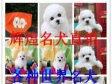 郑州养殖场直销萨摩耶【价钱可小刀】签协议包细小犬瘟