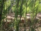 杨树湾乡 土地 200亩,21万,30年。