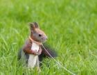 可爱的松鼠幼崽等你哦