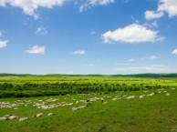 青岛旅行社黄岛口碑旅行社国旅 推荐暑期亲子内蒙古草原旅游