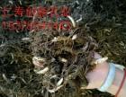 中药材优质种子种苗出售白芨,重楼,黄精,姜黄