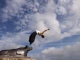 南京STREAM跑酷,空翻免费体验课,散打,双节棍