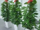 南昌Blossom花卉植物租摆公司主要对写字楼 住宅
