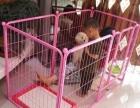转让狗围栏,增加狗狗活动空间,有效防止撕家