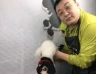 国家人力资源和社会保障部教培中心推荐_一诺宠物美容