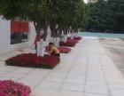 深圳公明承接室外绿地养护的公司