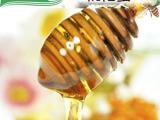 蜂产品供应商 鸿香源 枇杷蜂蜜