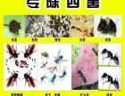 凤岗塘厦灭白蚁灭蟑螂灭鼠灭臭虫灭蚂蚁白蚁防治除四害
