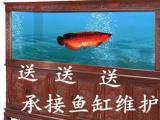 上门清洗鱼缸 清理鱼缸调理水质 维护鱼缸