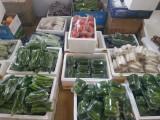 郑州新鲜蔬菜箱
