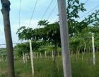 牛仔架 绿化园林转让