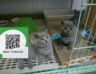 天津哪里卖蓝猫 天津哪里有宠物店 天津哪里卖宠物猫便宜