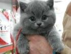 【米粒家的猫】— 您买猫的第一选择