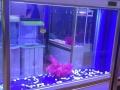 专业鱼缸清洗消毒,售后服务