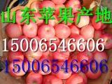 东阳红富士苹果价格山东苹果批发价格