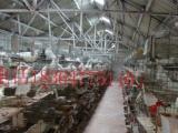 哪里有卖白羽王鸽的,一对白羽王肉鸽多少钱出售白羽王鸽