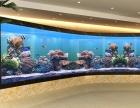 定做大型观赏鱼缸,广东哪里定做弧形玻璃鱼缸,海水珊瑚鱼缸定做