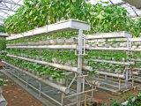 寿光智能温室建设|山东温室大棚造价