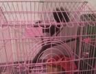 魔王松鼠连鼠带笼