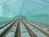 大棚膜京联塑料专业供应——加工农用薄膜