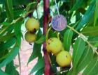 供应猴头核桃-手串原料-核雕籽料