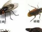 海侨30年专业灭四害 现有灭蟑螂 老鼠一次灭绝
