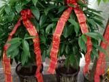 金蔷薇鲜花店花到付款/外送开业植物