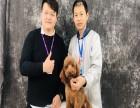 广东宠物美容培训学校 包就业火热招生