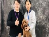 廣東寵物美容培訓學校 包就業火熱招生