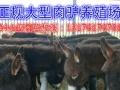 肉驴加盟 种植养殖 投资金额 1-5万元
