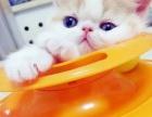 动画人物加菲猫咪,包健康,无辜脸,萌表情