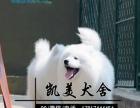 纯种健康品相佳毛色靓萨摩犬 微笑天使萨摩耶出售 欢迎上门挑选