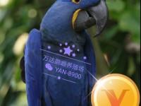 鹦鹉出售,购买鹦鹉,鹦鹉养殖场,哪里有出售各种大型金刚鹦鹉