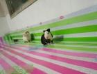 急售活泼可爱的荷兰猪豚鼠天竺鼠两只 已打疫苗保证健康