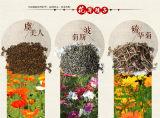 讲讲贵州百日菊种子价格百日草种子多少钱一公斤
