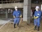 博罗木别墅防治白蚁,博罗工厂白蚁防治,博罗预防白蚁所