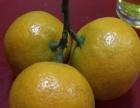 汉中褒河蜜橘