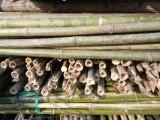 北京河北唐山绿化杉木杆竹竿