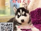 佛山在哪里有卖哈士奇 佛山纯种哈士奇幼犬一只价格多少